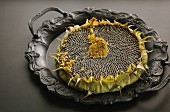 A dried sunflower on a vintage metal tray