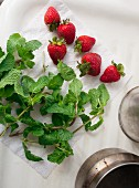 Freshly washed strawberries and mint sprigs on kitchen roll