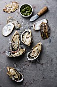 Open Oysters with ice, green salsa sauce and knife on gray concrete background