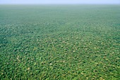 Lowland rainforest,aerial view,Congo