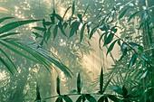 Rainforest vegetation in mist