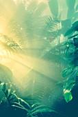 Morning light on rainforest vegetation