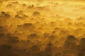 Morning clouds over lowland rainforest
