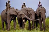 Garamba National Park elephant school