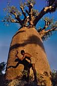 Man cutting baobab bark for rope making