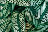 Rainforest vegetation,Rainforest,Brazil