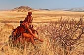 Commiphora wildii harvest,Namibia