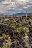 Malpais Lava Flow,New Mexico
