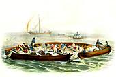 Tuna fishing,19th century