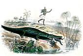 Nile crocodile and baby,19th century