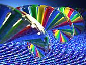 DNA strand,illustration