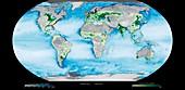 Coastal dead zones,global satellite map