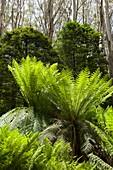 Sub-alpine forest,Australia
