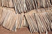 Dried palm leaves