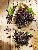 Freshly picked elderberries in a basket on a wooden surface
