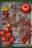 Various tomatoes on a baking sheet (top view)