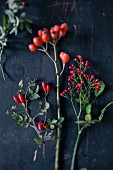 Sprigs of various rose hips on black background