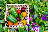A basket of fresh garden vegetables in the middle of a flowerbed