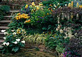 HOSTA, LILIUM, Iris, EUPHORBIA, INULA, Carex,
