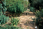 gemulchter Garten