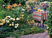 Sitzplatz am Sommerbeet: Anchusa capensis, Rosa 'Tequila'-Beetrose