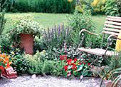 Kräuterbeet an der Terrasse: Rosmarinus officinalis 'Pendula'