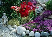 Phlox subulata 'Purple Beauty', Aubrieta, Tulipa 'Blue Parrot'