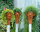 Frostbeständige Tontöpfe auf Holzstäben:Agrostis