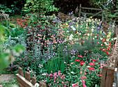 Beet mit Aquilegia, Monarda, Geranium, Iris