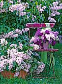 Syringa vulgaris / weißer Flieder im Korb, Vase mit Fliederstrauß