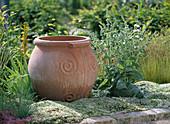 Salvia argentea / Silbersalbei, Asphodeline / Junkerlilie, Thymus