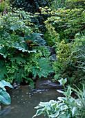 Bachlauf über Natursteine, Rheum / Zierrhabarber, Osmunda