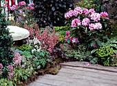 Rhododendron, Pieris / Lavendelheide, Heuchera / Purpurglöckchen