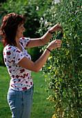 Junge Frau entfernt Samenansätze bei