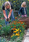 Junge Frau streut Kompost ins Beet