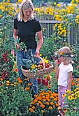 Mutter und Tochter ernten Gemüse im Bauerngarten