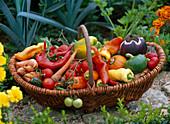 Korb mit Capsicum / Paprika, Lycopersicon / Tomaten