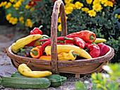 Cucurbita / Zucchini, Capsicum / Paprika