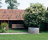 Sitzbank Unter Holunder