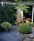 Ausschnitt aus Atriumgarten mit 'winterharten'