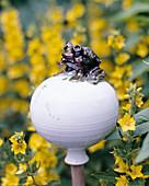 Gartenkugel mit Frosch