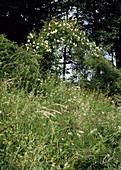 NATÜRLICHE Blumenwiese am Hang