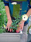 Balkonbepflanzung im Frühjahr