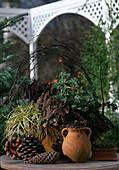 Carex, CALLUNA / BESENHEIDE