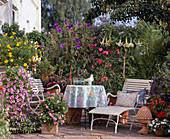 Kuebelpflanzenterrasse mit mediterranem Flair