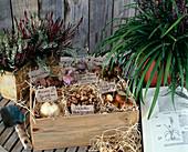 FRÜHLINGSZWIEBELN: VON links oben= Fritillaria
