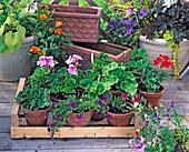 abhärten VON Jungpflanzen