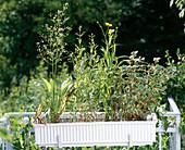 Balkonkasten mit Wasserpflanzen