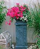 Blechsäule und Blechschale bepflanzt mit: Petunia,