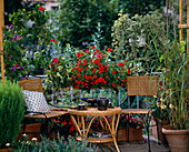 Balkon mit Begonia tuberhybrida 'Charisma Orange'